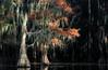 Caddo Lake State Park - Nov 10, 2019