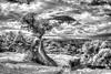 The Spirit Tree - Canyonlands National Park - Utah
