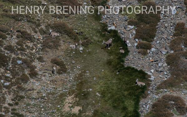 Yosemite NP Bighorn Sheep Trek 2018