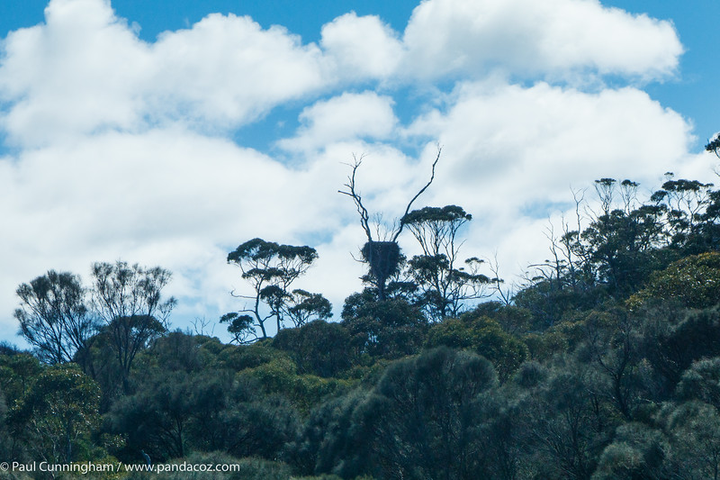 The inverted cone shape in the tree in the middle is a sea eagle nest.