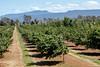 HazelBrae Nut Farm, Hagley