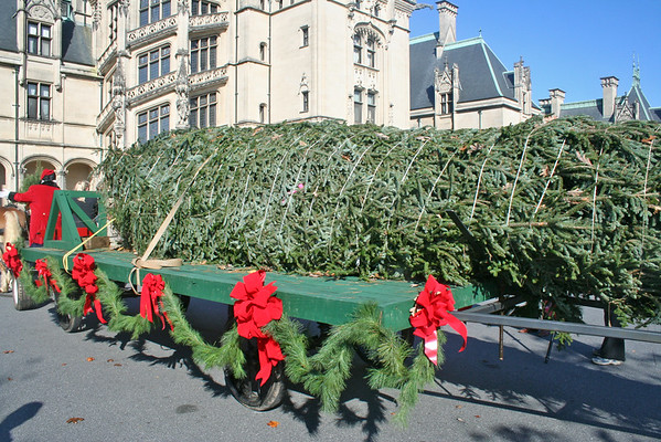 BILTMORE ESTATE CHRISTMAS TREE