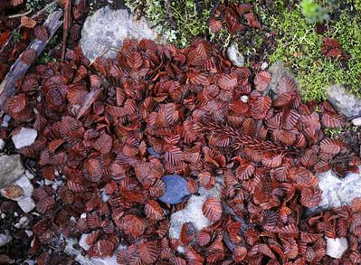TASMANIA NORTH 2009/13