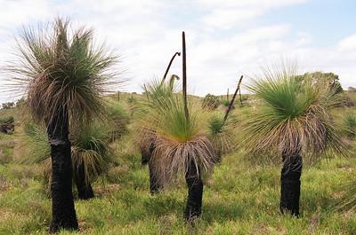 Western Australia 2007-1