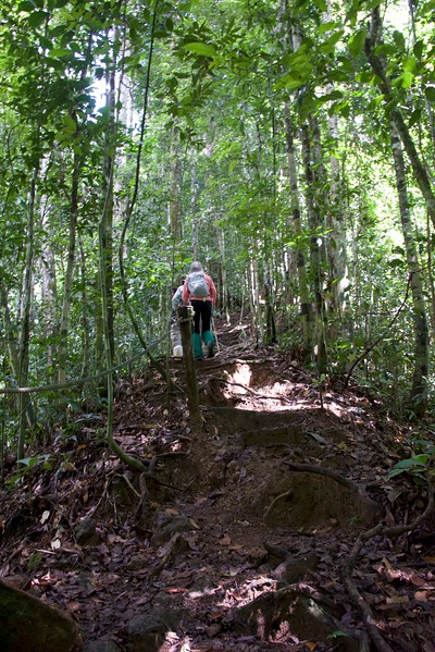 Tough trail - roots and mud