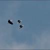 Hornbills over the Deer Cave