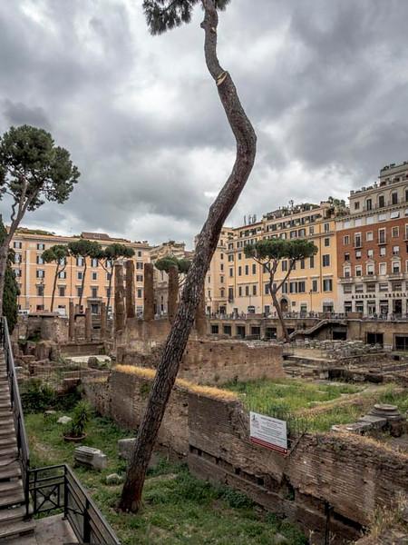 006 - Pine tree marking site where Julius Caesar was assassinated_