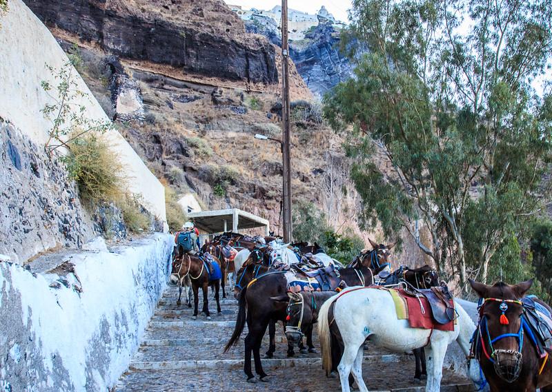 097 - Donkeys on path  up to Santorini
