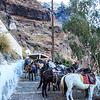 097 - Donkeys on path  up to Santorini