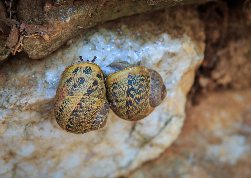 120 - Snails by Marble Quarry
