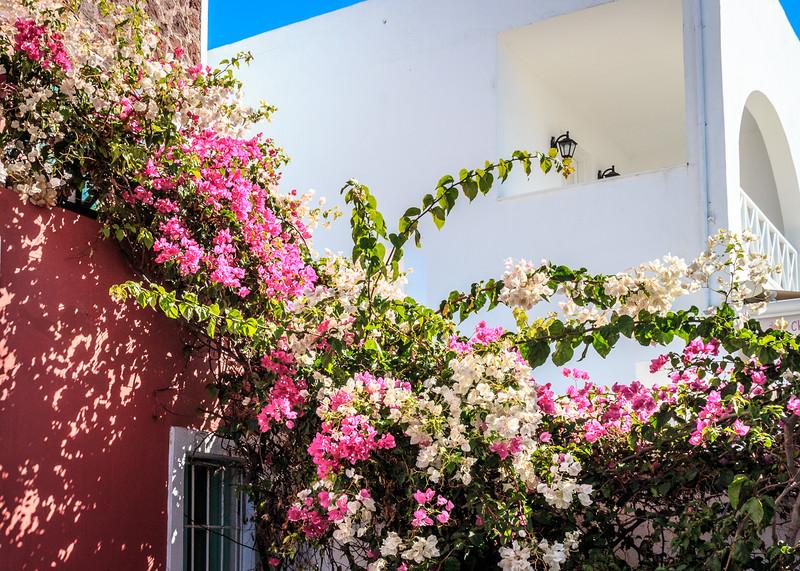 104 - Flowers on a building - Santorini