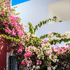 104 - Flowers on a building - Santorini