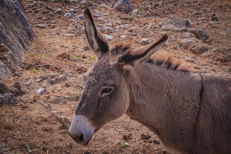 114 - Donkey in Melanes Valley