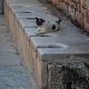 145 - Ephesus -  Public latrines on Curetes Street