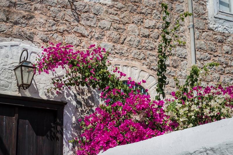 048 - Flowers on homes on Ydra