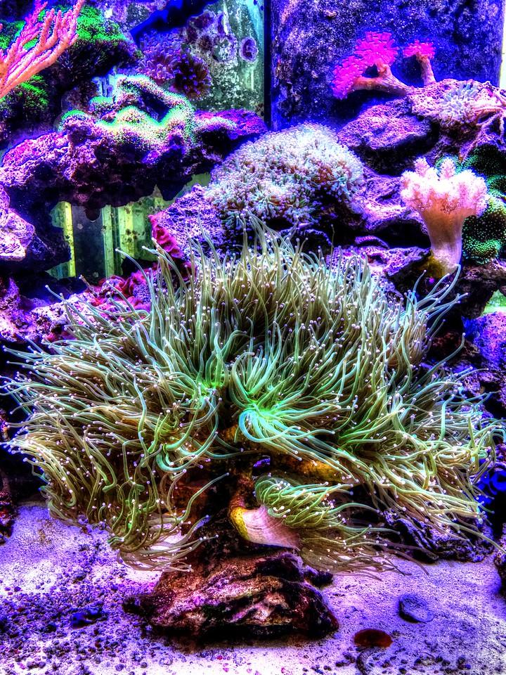 aquarium at Spoto's Restaurant in Stuart