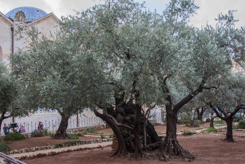 125 - Site near Garden of Gethsemene where Judas hung himself following his betrayal of Jesus