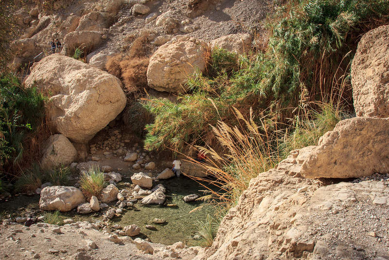 025 - Wadi was filled with wildlife, waterfalls and green areas   Later - for medicinal and sweet smelling plants (Song of Sol  1