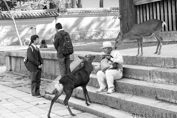 Nara, the first permenant capital of Japan, where deer are considered as sacred animals. and are ruling the city. Thousands of them are roaming freely in the streets.