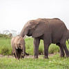 An elephant playing with his kid in Amboseli Kenya