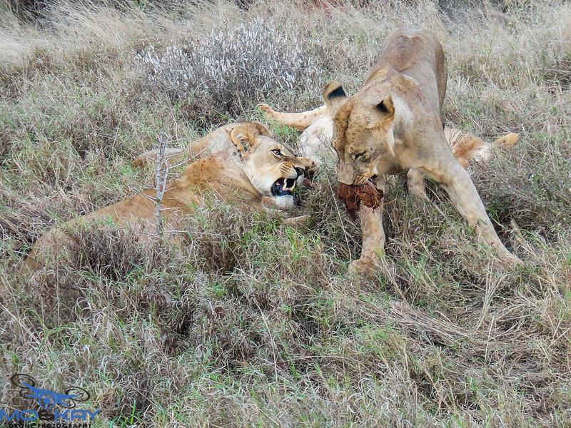 Kenya - Safari
