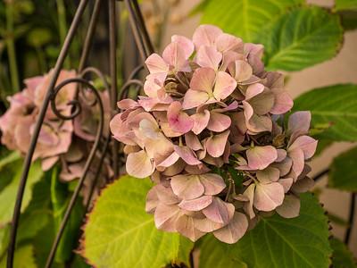 MACROflowers-1020753