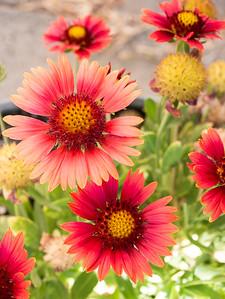 MACROflowers-1020823