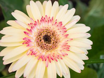 MACROflowers-1020694