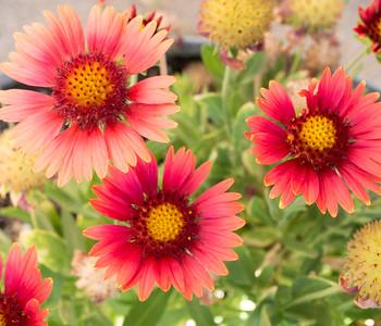 MACROflowers-1020825