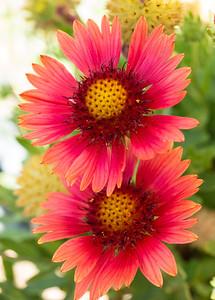 MACROflowers-1020805