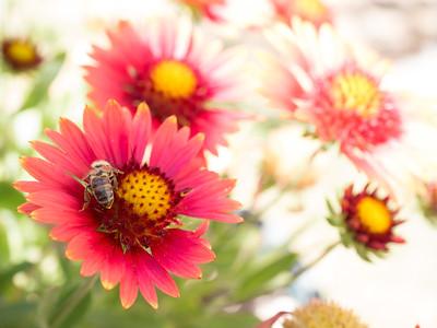 MACROflowers-1020808