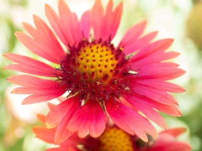 MACROflowers-1020781