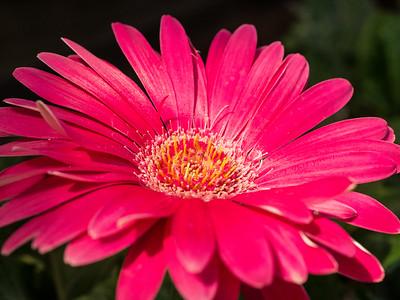 MACROflowers-1020693