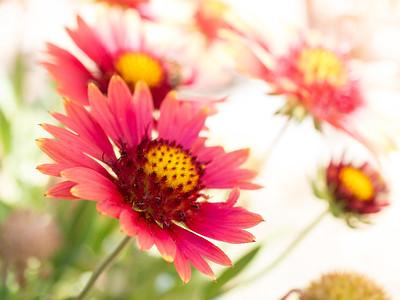 MACROflowers-1020816
