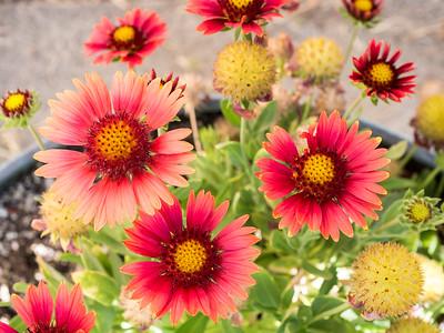 MACROflowers-1020826