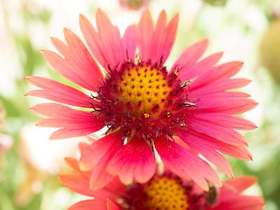 MACROflowers-1020782