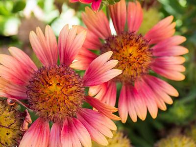 MACROflowers-1020817