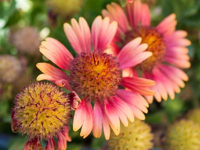 MACROflowers-1020783