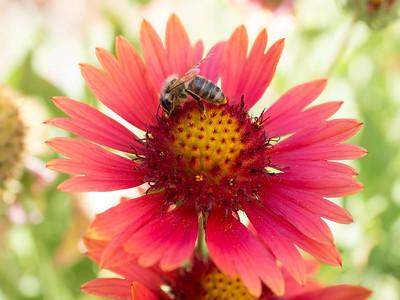 MACROflowers-1020785