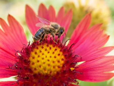 MACROflowers-1020798
