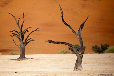 Dead trees in Namibia's dead valley deadvlei
