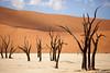 Dead trees in Namibia's dead valley deadvlei