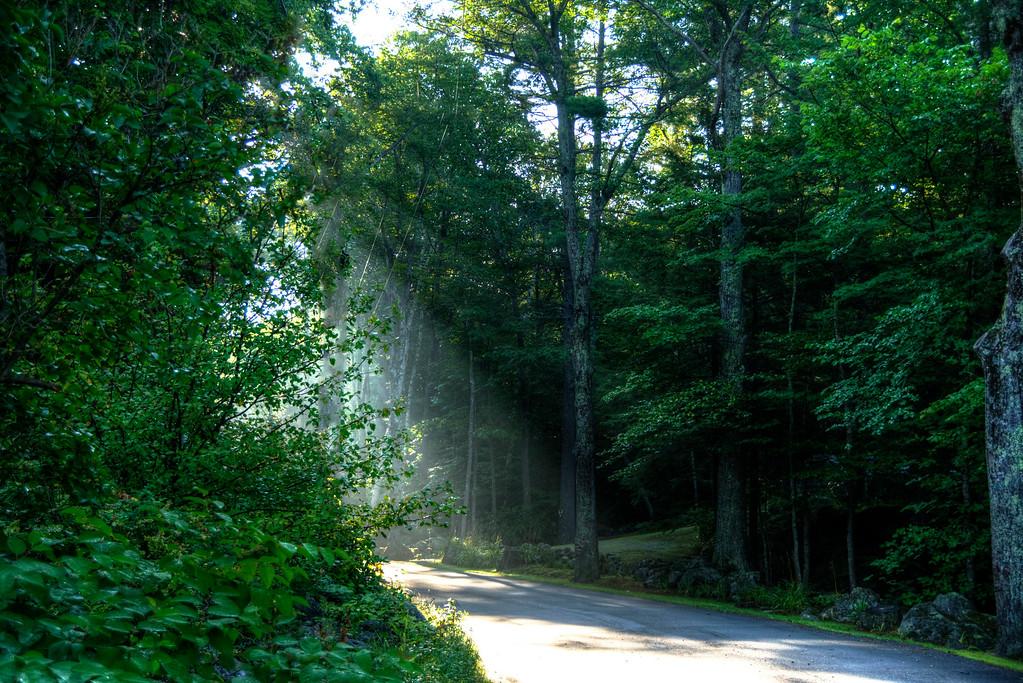 sun thru the trees,  Hillsboro Center, New Hampshire
