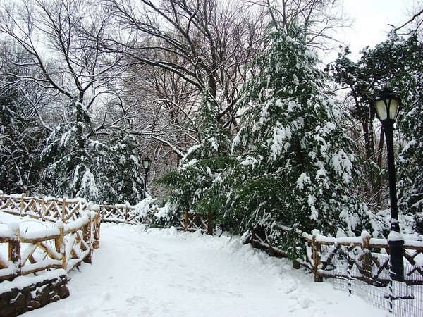 Snow covers the Shakespeare Garden in Central Park, New York.