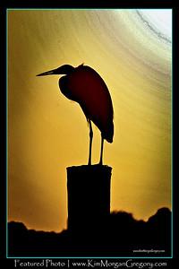 SHEM CREEK BIRD LIFE