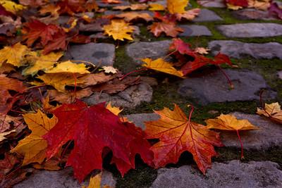 Fall color in Paris.
