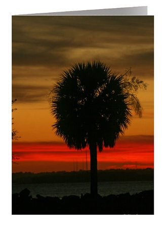 ~ PALMETTO SUNSET ~ 5 x 7 Greeting card Custimizable