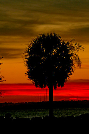 ~ PALMETTO SUNSET