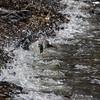 Penguins diving . . . 5