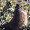 And . . . another seal view!  This one an Antarctic fur seal.